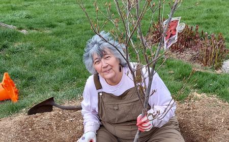 Planting the new dogwood